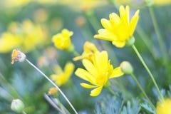 Opinión de la naturaleza del primer de la hoja verde en jardín en el verano bajo luz del sol Las plantas verdes naturales ajardin Foto de archivo libre de regalías