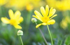 Opinión de la naturaleza del primer de la hoja verde en jardín en el verano bajo luz del sol Las plantas verdes naturales ajardin Imagen de archivo libre de regalías
