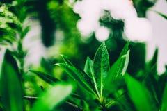 Opinión de la naturaleza del primer de la hoja verde en jardín en el verano bajo sunl foto de archivo