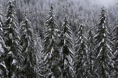 Opinión de la nieve Fotos de archivo