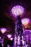 Opinión de la noche de árboles estupendos en el jardín de Singapur Foto de archivo