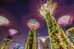 Opinión de la noche de la arboleda de Supertree en los jardines cerca de Marina Bay, Singapur Imagen de archivo