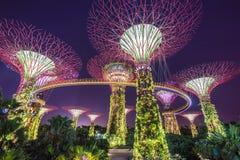 Opinión de la noche de la arboleda de Supertree en los jardines cerca de Marina Bay, Singapur Foto de archivo libre de regalías