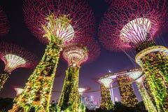 Opinión de la noche de la arboleda de Supertree en los jardines cerca de Marina Bay, Singapur Imágenes de archivo libres de regalías