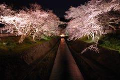 Opinión de la noche de los flores de cereza Fotos de archivo