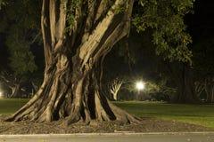 Opinión de la noche de un tronco de árbol viejo en Sydney CBD Foto de archivo libre de regalías