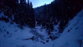 Opinión de la noche del bosque de Himachal Fotografía de archivo