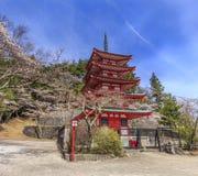 Opinión de la pagoda y de Sakura de Chureito Foto de archivo libre de regalías