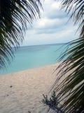 Opinión de la palmera, Puerto Rico, del Caribe Imagenes de archivo