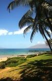 Opinión de la playa con las palmeras Foto de archivo