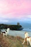 Opinión de la playa y del castillo del invierno con los perros Fotografía de archivo libre de regalías