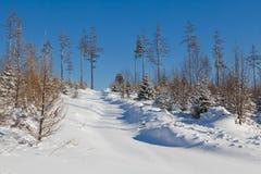 Opinión de la postal de la Navidad del invierno - nieve foto de archivo