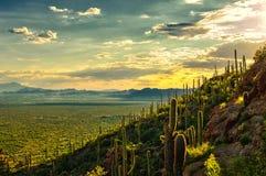 Opinión de la puesta del sol del desierto de Sonoran del parque de la montaña de Tucson, Tucson AZ Foto de archivo