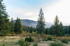 Opinión de la puesta del sol del parque natural de Apuseni profundamente en el coto natural del bosque del pino con las montañas, foto de archivo