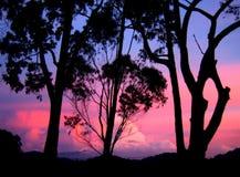 Opinión de la puesta del sol - silhoutte Foto de archivo
