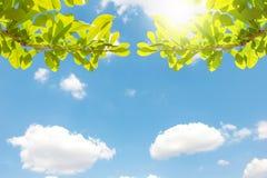 Opinión de la rama con el cielo azul y la nube Foto de archivo