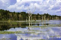 Opinión de la reflexión del agua del árbol del cielo en Siem Reap fotos de archivo