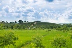 Opinión de la salida del sol del paisaje de la plantación de té en Chiangrai, Tailandia Imagen de archivo