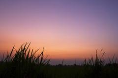 Opinión de la salida del sol sobre prados Fotos de archivo libres de regalías