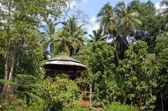 Opinión de la selva Imagen de archivo libre de regalías
