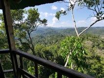 Opinión de la selva de una casa en el árbol Imagen de archivo