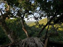 Opinión de la selva de una casa en el árbol Fotografía de archivo