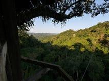 Opinión de la selva de una casa en el árbol Fotos de archivo libres de regalías