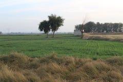 Opinión de la tarde en el país de Punjab Imágenes de archivo libres de regalías