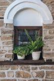 Opinión de la ventana de la naturaleza Imagen de archivo