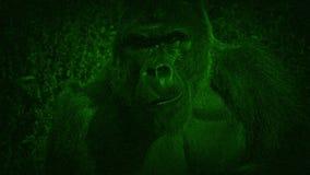 Opinión de la visión nocturna Gorilla Eating Plants metrajes