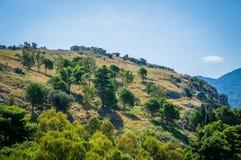 Opinión de las colinas de Cefalu con los árboles Imagen de archivo libre de regalías