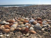 Opinión de las conchas marinas Foto de archivo libre de regalías