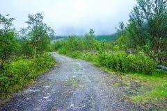 Opinión de los árboles de abedul y de camino forestal en Noruega Imágenes de archivo libres de regalías