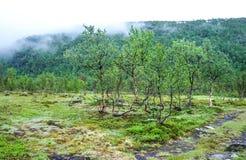 Opinión de los árboles y de la niebla de abedul en Noruega Foto de archivo libre de regalías