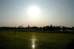 Opinión de los campos del arroz de la puesta del sol de la agricultura a la pagoda en Inwa, Amarapura, Myanmar imagen de archivo libre de regalías
