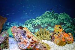Opinión de los corales Foto de archivo