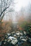 Opinión de niebla del otoño Tye River, cerca de las caídas de Crabtree, en George Washington National Forest, Virginia imágenes de archivo libres de regalías