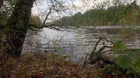 Opinión de nivel del agua del lago Achray, uno los 3 lagos cerca de Trossachs, Escocia almacen de video