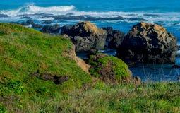 Opinión de océano Imagen de archivo libre de regalías