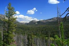 Opinión de parque nacional de Yellowstone Foto de archivo