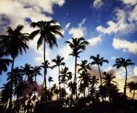 Opinión de perspectiva de las palmeras del coco Fotografía de archivo