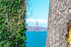 Opinión de puente Golden Gate dentro de los árboles famosos San Francisco fotos de archivo