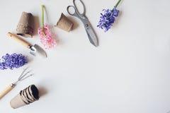 Opinión de sobremesa de la primavera del jardinero con las flores del jacinto, los potes de la turba y los utensilios de jardiner Imagen de archivo libre de regalías