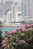 Opinión de Tel Aviv de la ciudad de Jaffa Foto de archivo