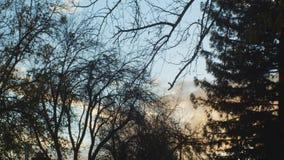Opinión de time lapse del bosque de las nubes almacen de video