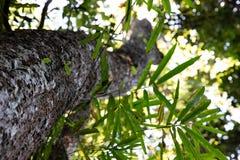 Opinión de tronco de árbol de debajo con perspectiva borrosa foto de archivo libre de regalías