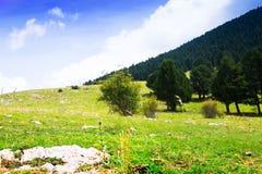 Opinión de Ummer del prado de la montaña imagenes de archivo