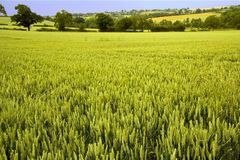 Opinión de Warwickshire de las tierras de labrantío del camino del ciclo del greenway del offchurch Foto de archivo