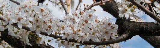 Opinión del árbol del flor, concepto agrícola estacional de la cosecha fotografía de archivo