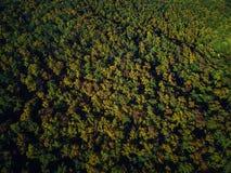 Opinión del abejón del bosque colorido imponente de la caída del otoño en la puesta del sol Fotos de archivo libres de regalías